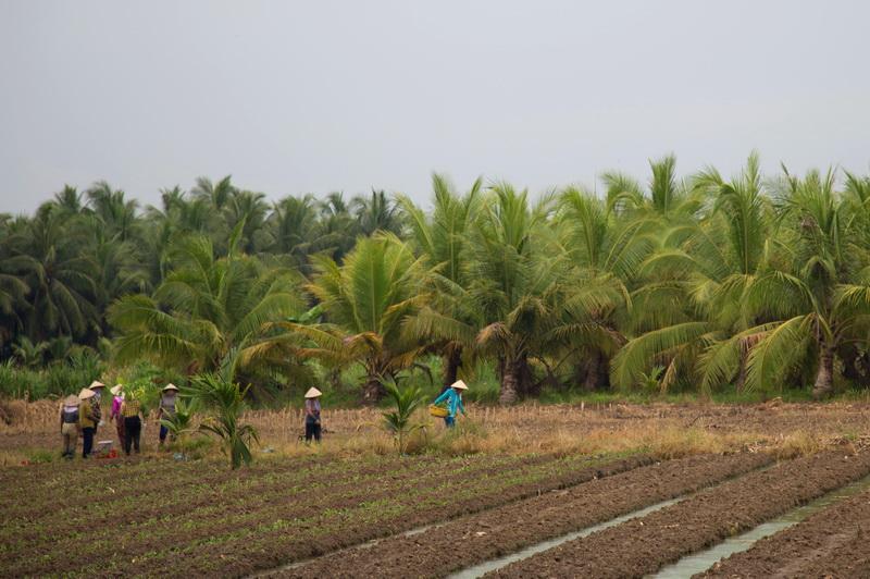 Chili, Coconut garden