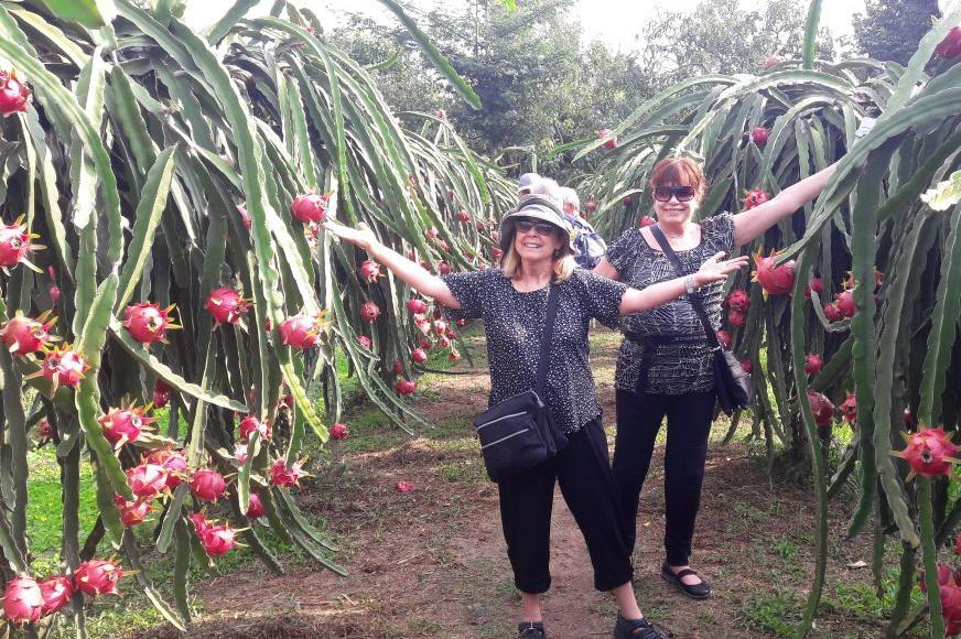 Dragon Fruits Garden