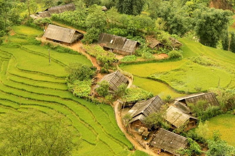 Rice terrace at Lao Chai village, Sapa